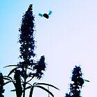 In Flight, B by MeParadise