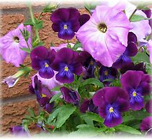 Pink and Purple Petunias and Violas by BlueMoonRose