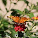 Gulf Fritillary Butterfly........ by DonnaMoore