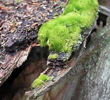 An Island Of Moss  by Sandra Foster