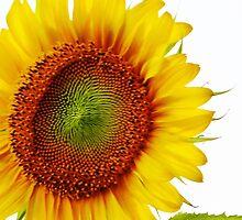 Som um  2 brighten yo day! by Monte Roberts