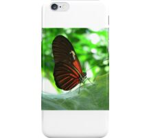 Zebra with a Sunburn iPhone Case/Skin