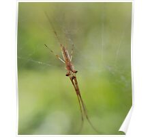 Very Creepy Orb Weaver Poster