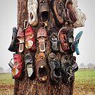 Shoe tree by Rosalie Dale