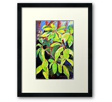 Umbrella leaves circa 1985 Framed Print