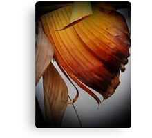 dried leaves Canvas Print