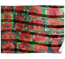 Red Flanders Poppies Collage with Lines Poster