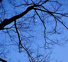The Moon among branches by junkgirl