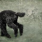 Running in the yard by Susana Weber