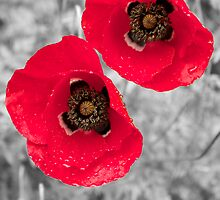 Black & White Colour Splash Poppies by Lucas Modrich