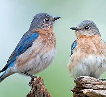 Bluebird Sisterhood by Bonnie T.  Barry