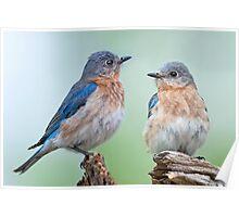 Bluebird Sisterhood Poster