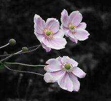Pink Flowers  by Samantha Sheldon
