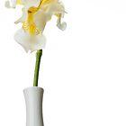 White Iris 1 by Jacinthe Brault