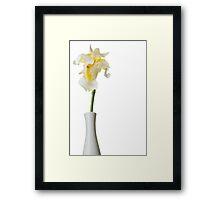 White Iris 1 Framed Print