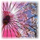 Cherry Blossom Square by John Dalkin