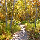 Autumn Trail by Jim Sauchyn