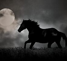 Dark Horse by kristijohnson
