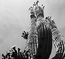 Blooming Cactus by James2001