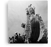 Blooming Cactus Canvas Print