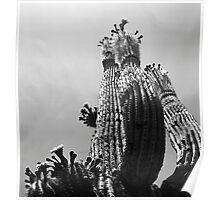 Blooming Cactus Poster