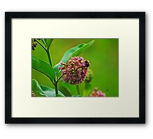 You Come Here Often? Framed Print