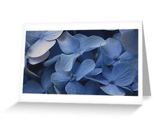 Hydrangea portrait Greeting Card