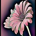 Colorful Daisy by iggys