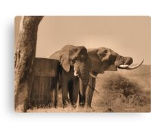 IN SEPIA- SENIOR COMPANY - THE AFRICAN ELEPHANT -Loxodonta africana Canvas Print