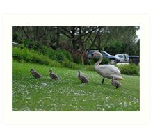 Mother Swan and Cygnets Art Print