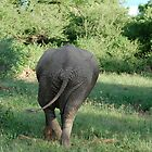 Elephant rear by troffle24