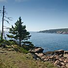 Otter Point - Acadia National Park, Maine by Jason Heritage