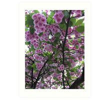 Japanese cherry blossom tree Art Print