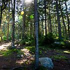 Pemetic Mountain - Acadia National Park, Maine by Jason Heritage