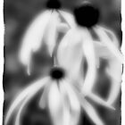 Flowers B&W by smoothstones