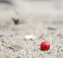 Berry on the beach by Alex Carpenter - Beare
