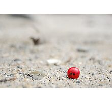 Berry on the beach Photographic Print