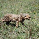 Prowling Chetah Cub by troffle24