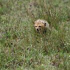Chetah Cub Hiding in Grass by troffle24
