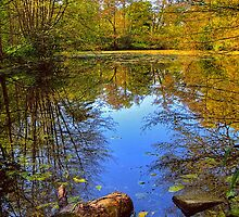 Pond Reflections by Ivan Horvath