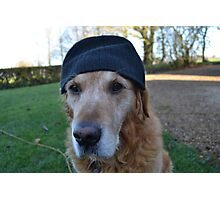 It's so cold in England, even the dogs wear wooly hats Photographic Print