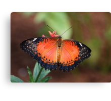 lacewing beauty Canvas Print