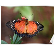lacewing beauty Poster