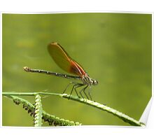 Dragonfly Racing Stripes Poster