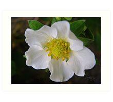 """Pear Blossom"" Art Print"