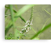 Flower Stalk Canvas Print
