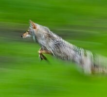 The Chase by Daniel  Parent