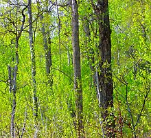 Spring in the aspen parkland by Jim Sauchyn