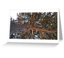 Mighty Cypress Greeting Card