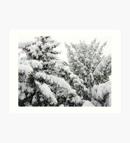 Spring Snowstorm Art Print